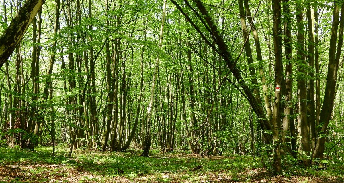 FOREST SHARING – NASCE LA PRIMA PIATTAFORMA PER LA TUTELA DEI BOSCHI